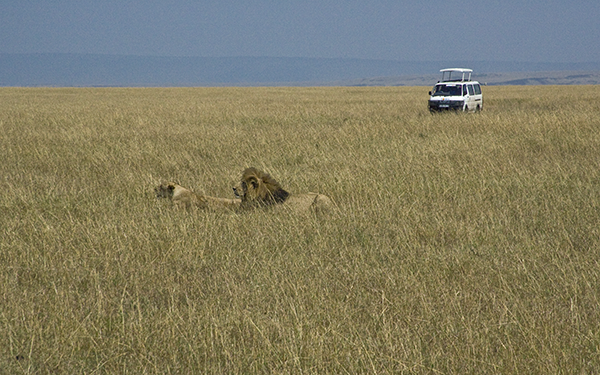 lions-and-photographers
