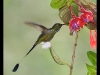 booted-racket-tail-2