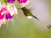 booted-racket-tail
