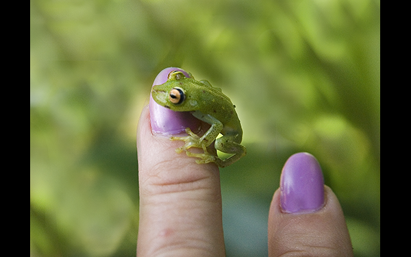 frog-on-finger