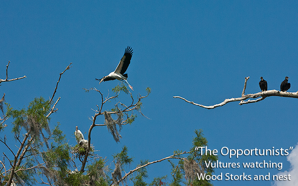 the-opportunists-vultures