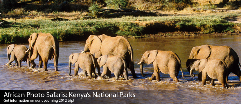 Elephants in Whatever River