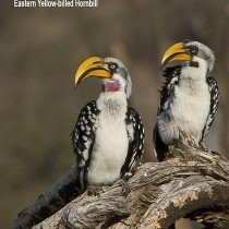 May 2011 Newsletter: The Birds Of Africa