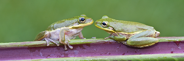 Frog-Lovers