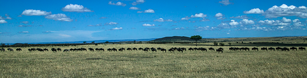 The-Great-Wildebeest-Migration-Kenya