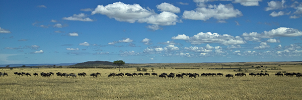 The-Great-Wildebeest-Migration