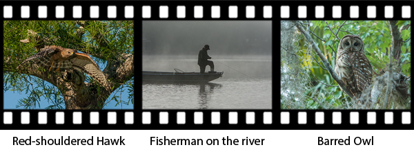 newsletter143-pontoon-film-strip