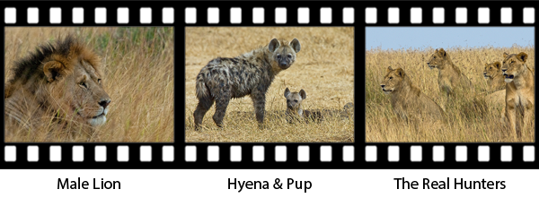 newsletter146-africa-film-strip2