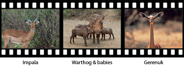 newsletter146-africa-film-strip3