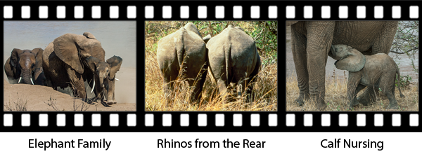 newsletter146-africa-film-strip5