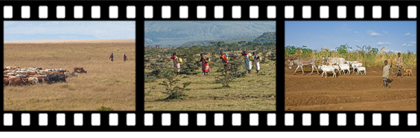 newsletter148-africa-film-strip2
