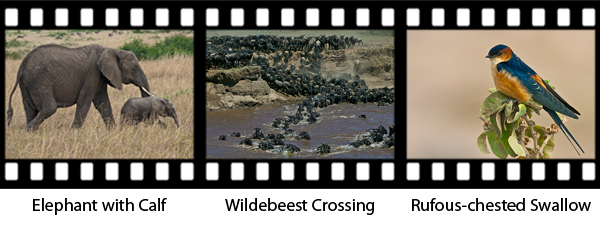 newsletter160-africa-film-strip1