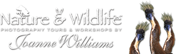 Photography Tours & Workshops by Joanne Williams